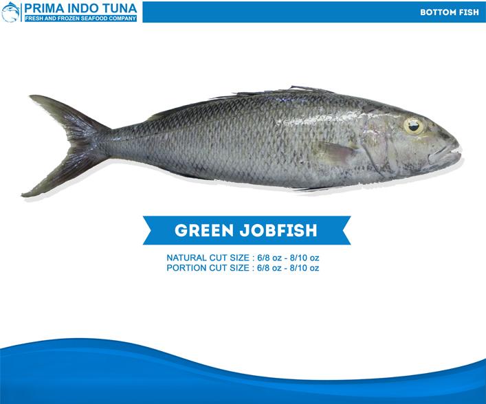 Green Jobfish